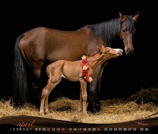 Belle photos sur les chevaux (3/3)