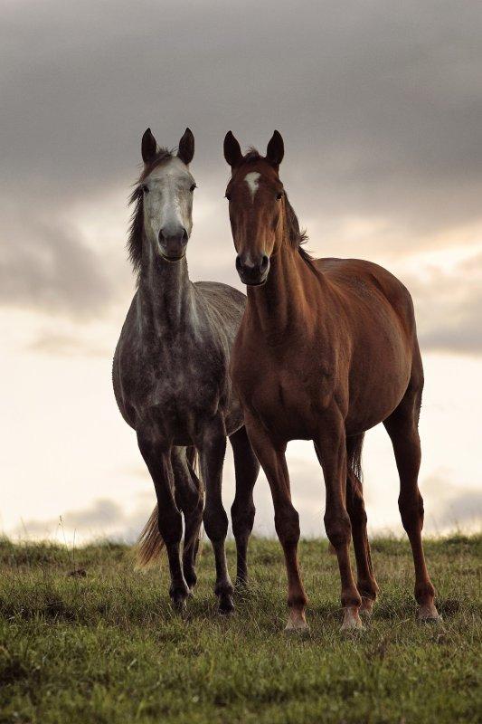 Belle photos sur les chevaux (2/3)