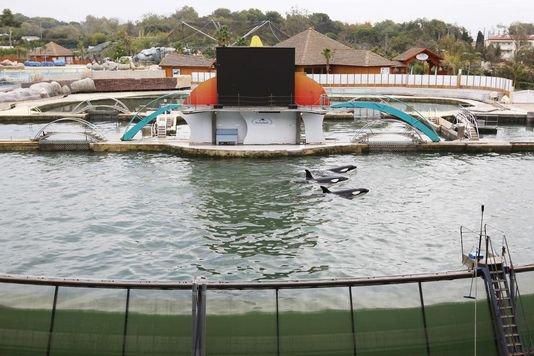 Une orque de 19 ans meurt au Marineland d'Antibes