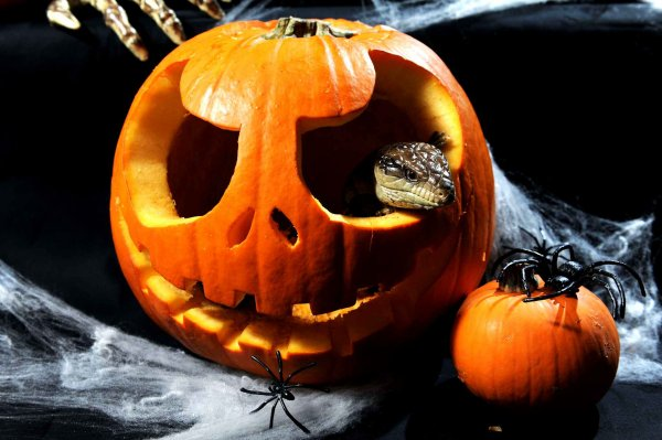 Joyeux Halloween 2015 (10/13)