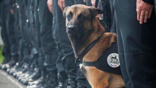 Un chien d'assaut tué dans l'opération à Saint-Denis