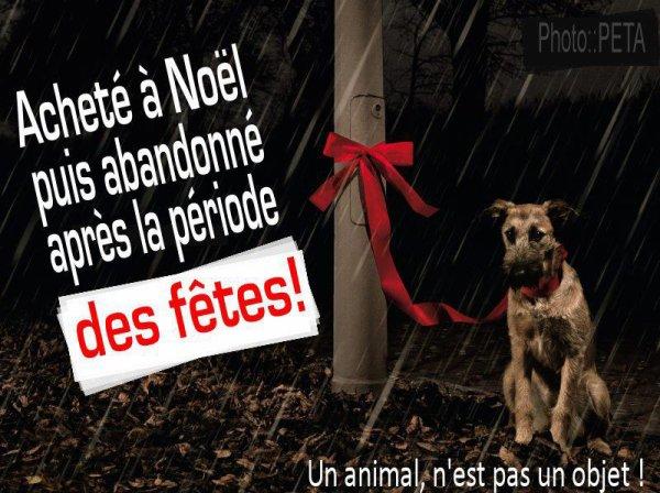 Un animal c'est un cadeau pour la vie et non un cadeau pour Noel
