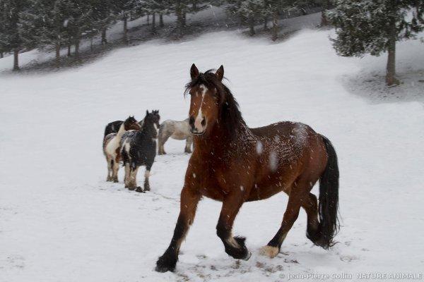 Les chevaux c'est trop beaux (2/3)