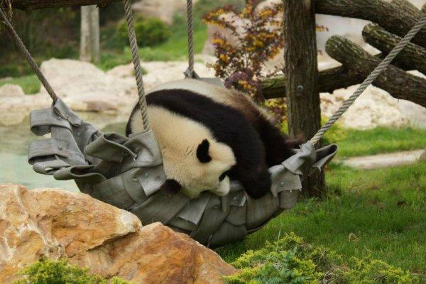 De magnifique panda (42/44)