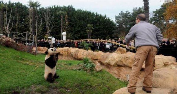 De magnifique panda (44/44)