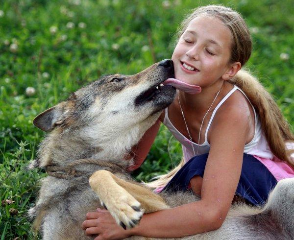 Un loup cool avec une fille