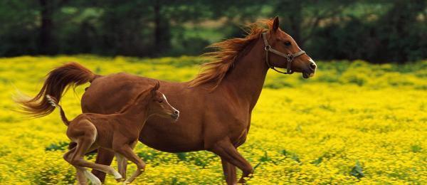 De beaux chevaux (3/3)