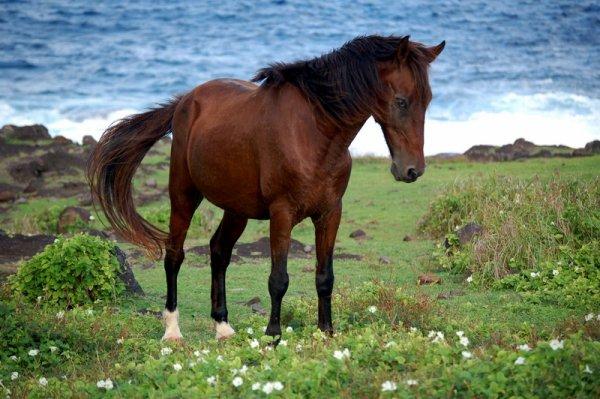 De beaux chevaux (2/3)