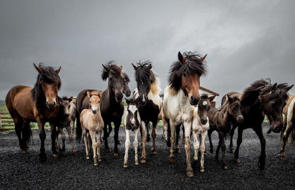 Que de chevaux !!!