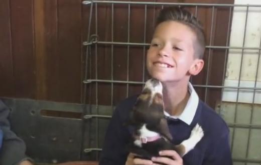 Charente: Enzo adopte l'un des chiots qu'il avait sauvé de la noyade