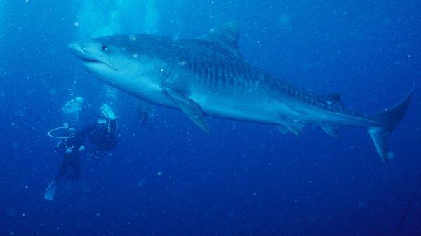 Un samedi avec des requins (1/3)