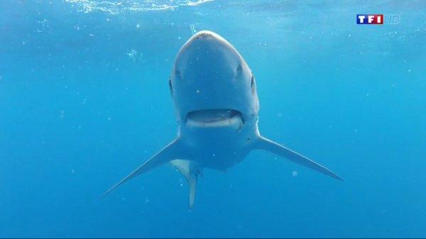 Un samedi avec des requins (2/3)