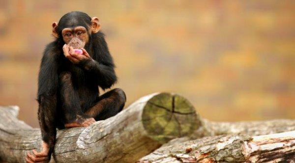 Que c'est mignon un singe (2/3)