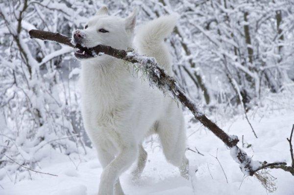 Un chien dans la neige (2/3)