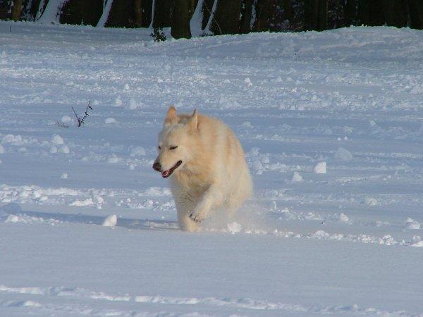 Un chien dans la neige (1/3)