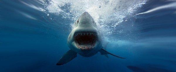Requin droit devant !!!
