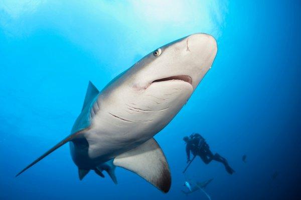 Un requin avec la présence d'un humain (3/6)