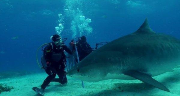 Un requin avec la présence d'un humain (4/6)