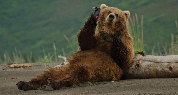 Un ours qui est au téléphone
