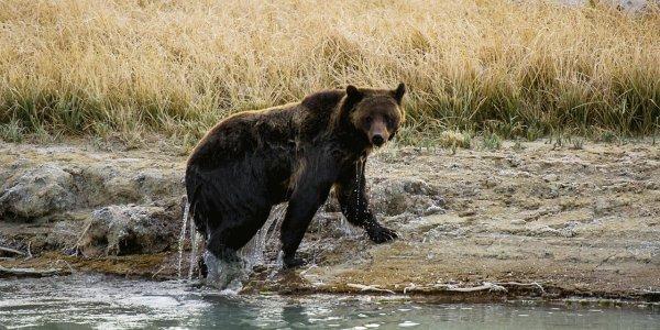 Que c'est beau un ours (1/3)