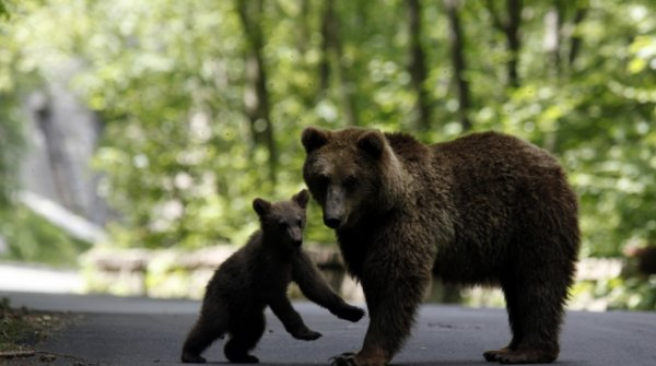 Que c'est beau un ours (2/3)