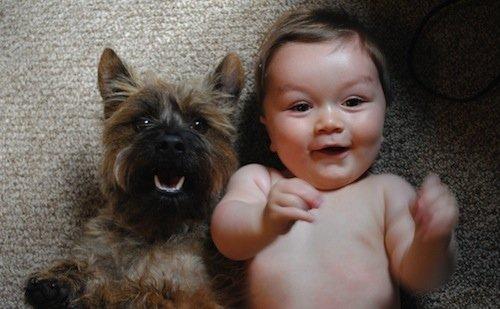 Chien et enfant heureux