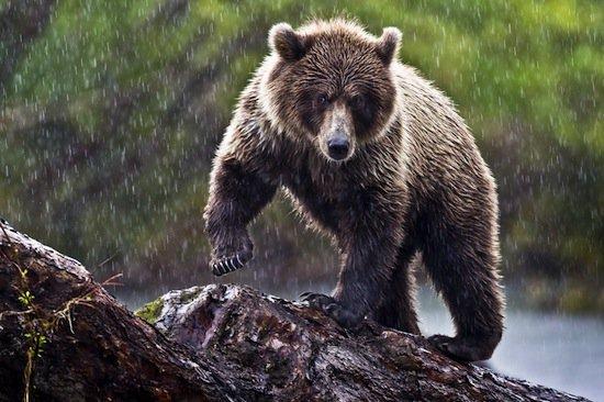 Nos amis les ours (2/2)