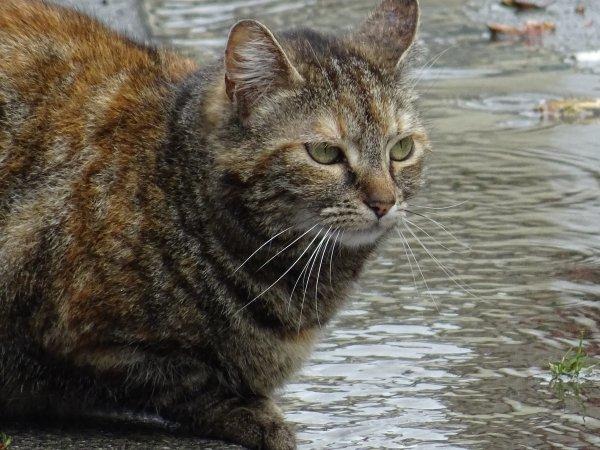 Un beau chat (3/3)