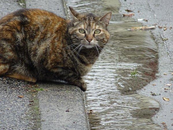 Un beau chat (2/3)