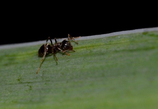 Une fourmi (2/2)