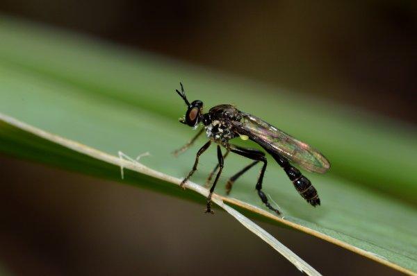 Un insecte posé sur une feuille