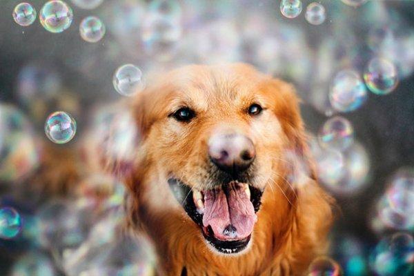 Un chien dans sa bulle