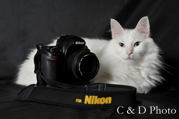 Encore un chat photographe