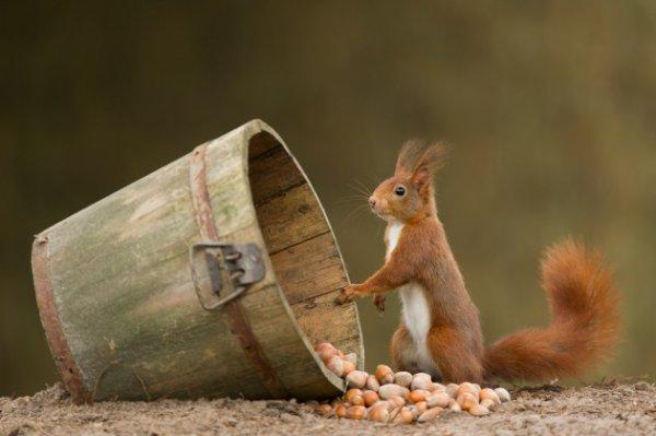 Un bel écureuil (4/4)