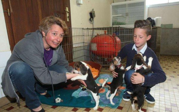 Enzo a sauver la vies de plusieurs chiens (2/3)