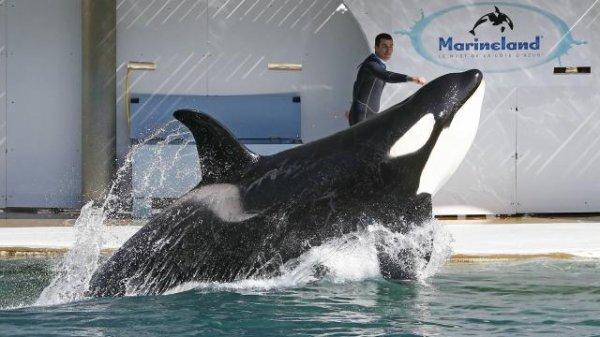 Marineland d'Antibes. 550 militants dénoncent une prison pour animaux