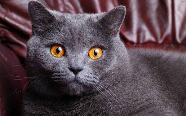 Que c'est beau un chat !!! (3/3)