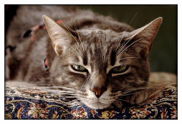 Que c'est beau un chat !!! (2/3)