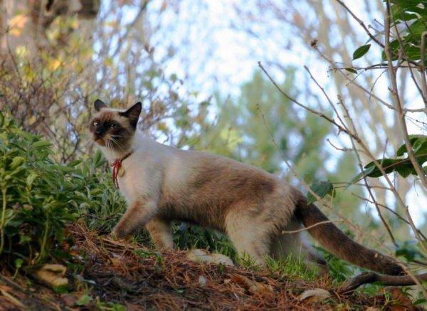 Que c'est beau un chat !!! (1/3)