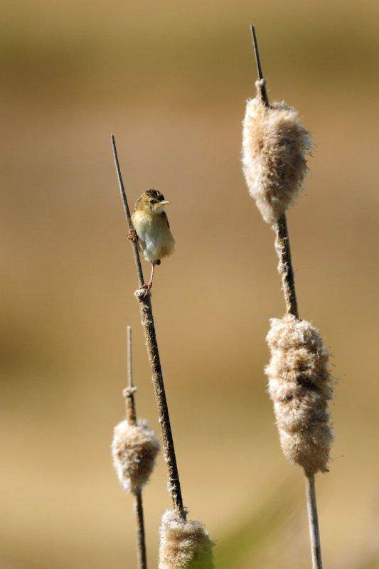 Un oiseau arriver au sommet