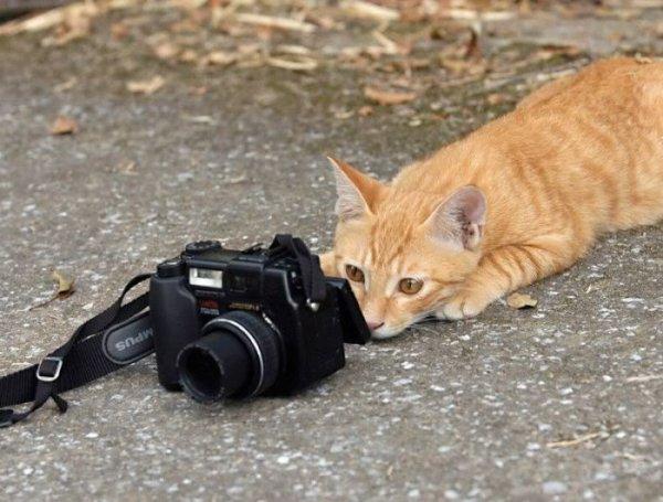 C'est fou le nombres de photographes
