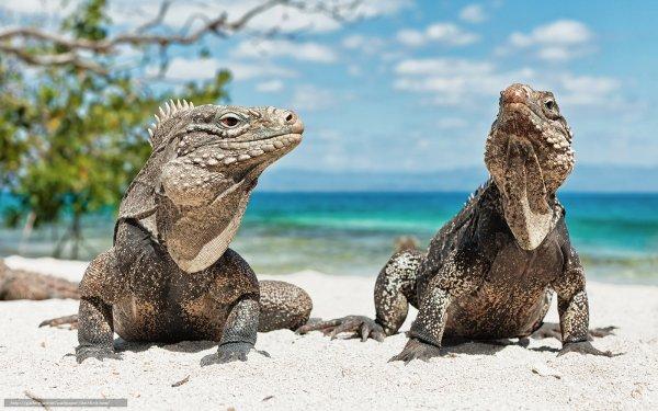 Ces animaux à la plage (2/20)