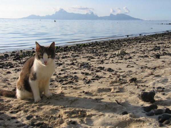 Ces animaux à la plage (4/20)