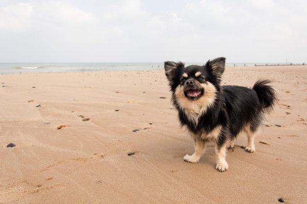 Ces animaux à la plage (9/20)