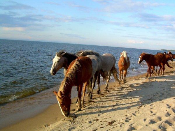 Ces animaux à la plage (11/20)