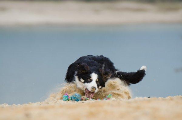 Ces animaux à la plage (14/20)