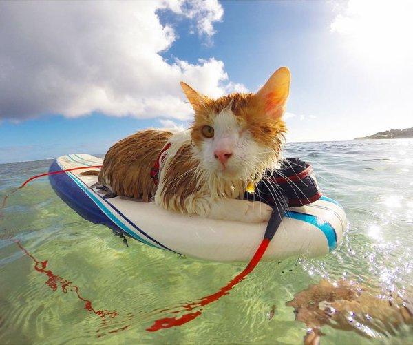Ces animaux à la plage (20/20) Un chat à la plage malgré son handicape