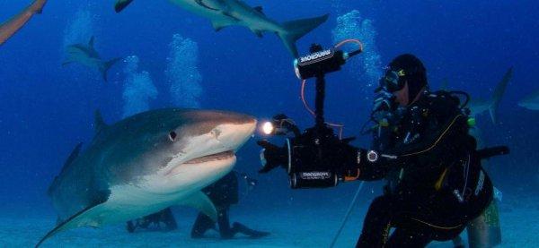 Un beau requin (2/3)