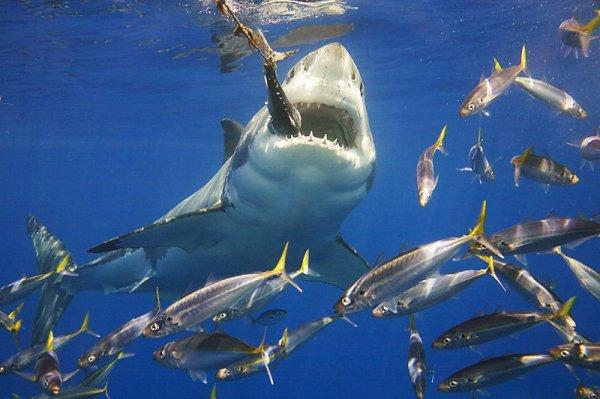 Un beau requin (3/3)