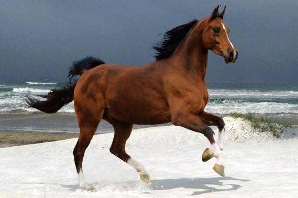 Vive les chevaux (1/3)
